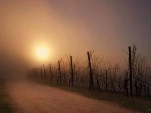 image-vigne-1-300x224